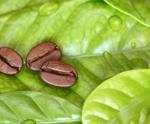Green Coffee - Πράσινος Καφές