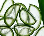 Aloe - Αλόη